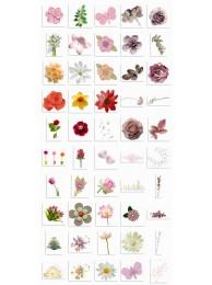 Flora2 Clipart